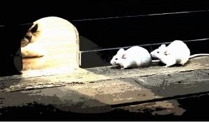 ratones en peligro